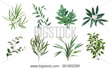 Green Realistic Herbs. Eucalyptus, Fern Plant, Greenery Foliage Plants, Botanical Natural Leaves Her