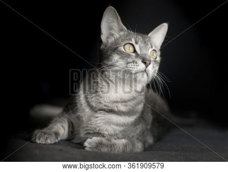 Beautiful cat kitten portrait isolated on black background