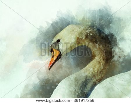 Watercolor Illustration Of A White Swan On A White Background. Bird Illustration.