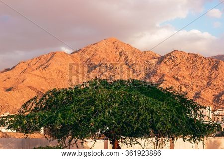 Middle East Jordan City Scape View Of Tree Foliage Foreground And Eastern Arabian Architecture Build