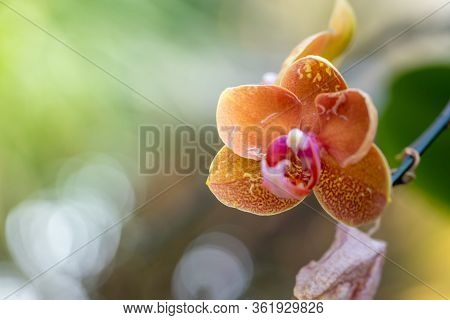Beautiful Blooming Orchids In Forest