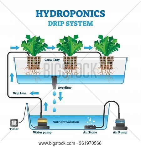 Hydroponics Vector Illustration. Labeled Drip System Explanation Scheme. Automatic Watering Technolo