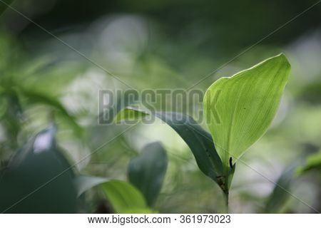 Young Green Plant On A Greenish-brown Blurry Field-meadow Background With A Large Yellowish Circle S
