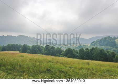 Green Foggy Mountain Meadow Slope Covered With Pine Trees, Grass And Wild Flowers Against Pale Cloud