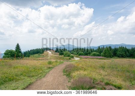 Mountain Hiking Lanes Curving Between Grass Shrubs, Flower Beds,green Bushes And Pine Trees With Vie