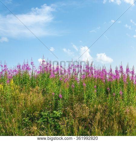 Pink Flowery Horizon