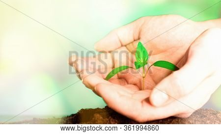 Hands Of Farmer Growing And Nurturing Plant Growing On Fertile Soil. Nurturing Baby Plant. Protect N