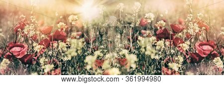 Flowering, Blooming Beautiful Flowers In Spring, Poppy Flower And Yellow Flower Lit By Sun Rays