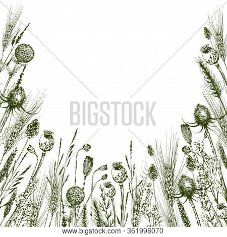 Square Card With Green Meadow Herbs, Thistles And Wild Flowers. Hand Drawn Botanical Illustration Is