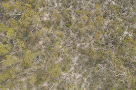An Aerial View Of Trees Regenerating After A Bush Fire In South Australia