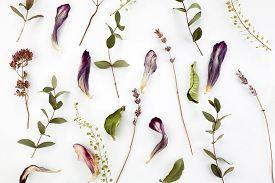Vintage Pattern For Decorative Design. Vintage Floral Pattern. . Minimal Flat Lay. Dry Flowers Backg