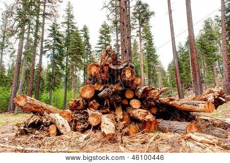 Trees Cut Down In Clearcut Area Of Forest