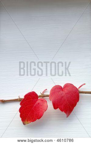 Love Leaves