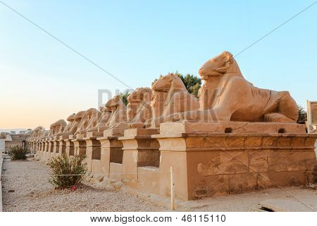 Row of ram-headed spinxes in karnak temple, luxor, egyp poster