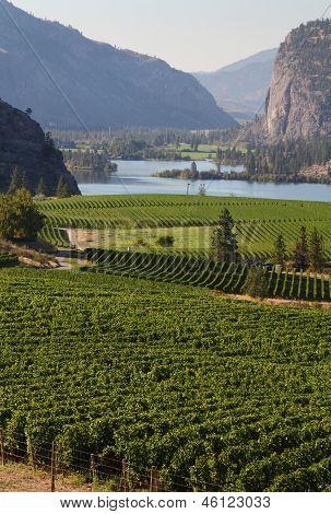 Okanagan Vineyard Scenic, British Columbia