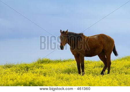 Horse Between Flowers