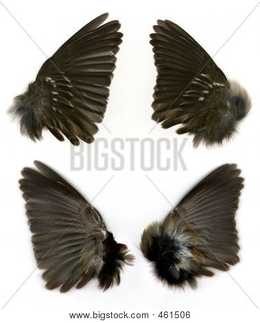 Sparrow's Wings