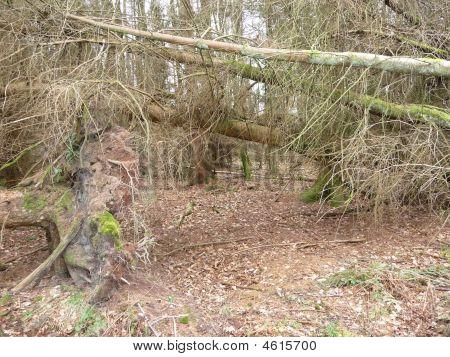Gap in woods