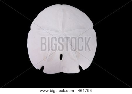 sand dollar isolated over black poster