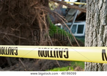 Caution tree crash danger zone