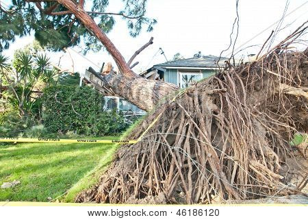 House natural crasher