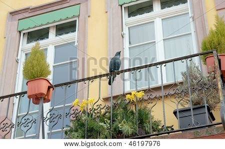 Balcony decorated cast-iron crow sculpture. Hauptstrasse Offenburg Germany poster