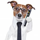 business dog with a smartphone and glasses poster
