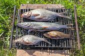 Fresh fish prepared for hot smoking in summer poster