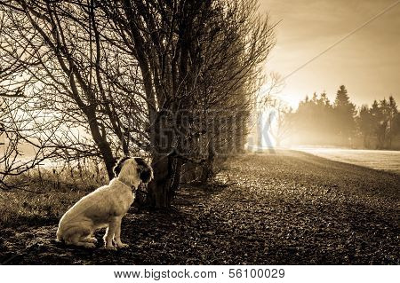 Cute Cocker Spaniel dog looking at sunlight at the end of the road poster
