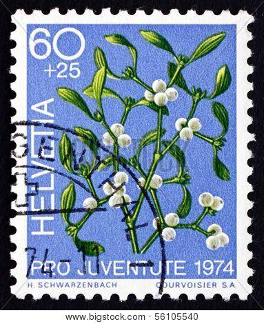 Postage Stamp Switzerland 1974 Mistletoe, Viscum Album, Plant