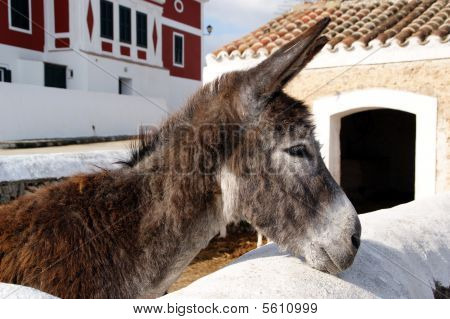 Menorca - Balearic Islands - Menorca Tourist Island- Spain
