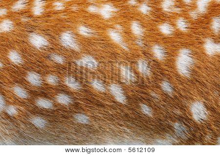 Deer Hide Details