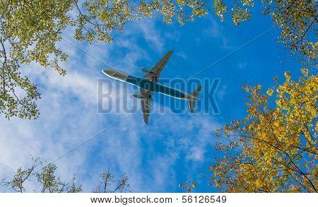 Plane beneath trees