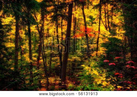 Diffused Autumn Forest