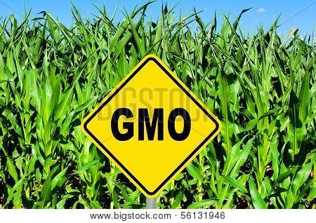 Gmo Sign