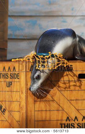 Seal Environmental Hazard