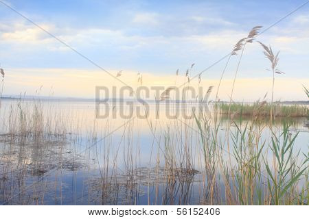 Whispering Reeds Swaying Softly In Blue Golden Lake