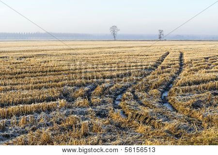 Harvested Rice Field In Autumn, Lomellina (north Italy)