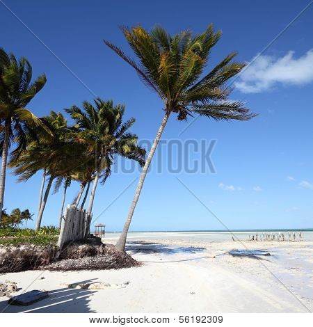 Cuba - Caribbean beach Cayo Guillermo. Sandy coast nad coconut palm trees. Jardines del Rey region. Square composition. poster
