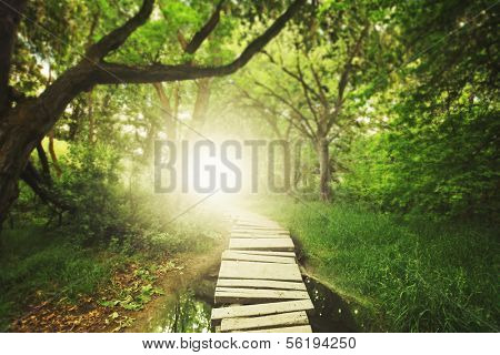 a magical bridge in a green lush forest