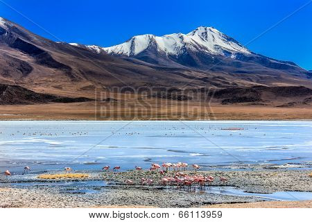 Flamingoes in Laguna Verde ,Bolivia