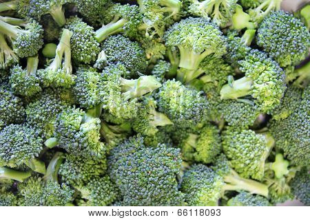 Broccoli Closeup