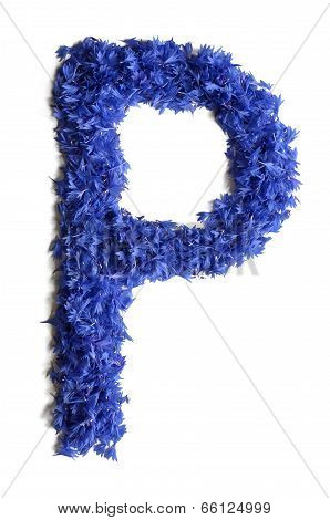 Letter P Made Of Flowers (cornflowers) Isolated On White Background