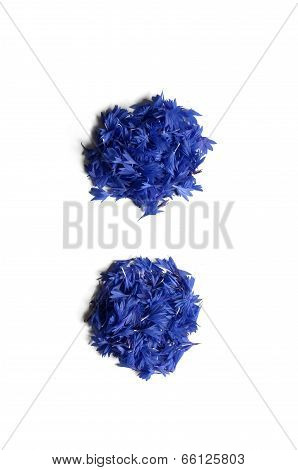 Colon Made Of Flowers (cornflowers) Isolated On White Background