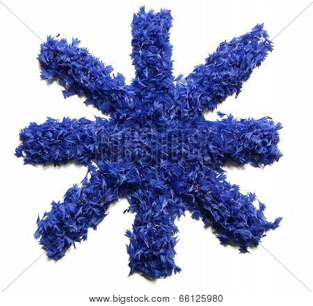 Star Sign Made Of Flowers (cornflowers) Isolated On White Background