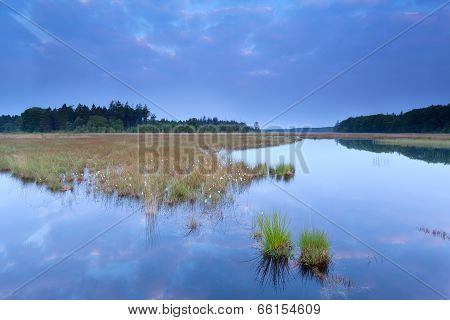 Wild Swamp In Forest At Dusk