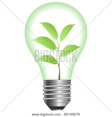 Plant In Lamp