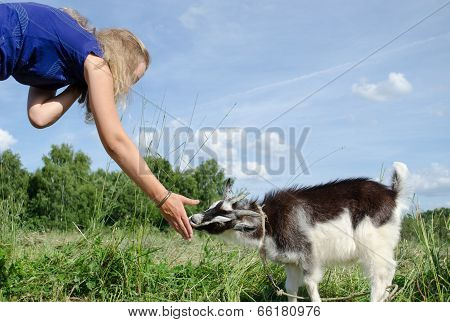 girl feed goatling scratch his snout chuck poster