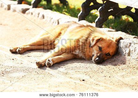 Sleepy dog outdoors poster