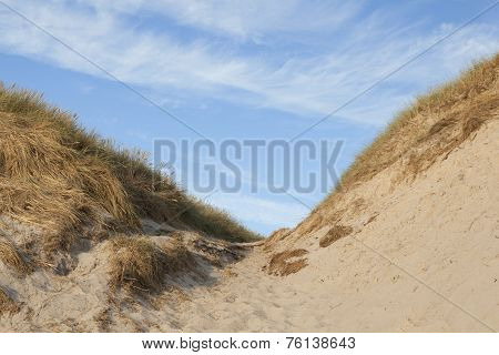 sand dunes on the North Sea in Hvide Sande Denmark with blue sky poster